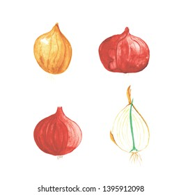 Watercolor red and yellow onions, and half of onion on white background. Bulb vegetables.