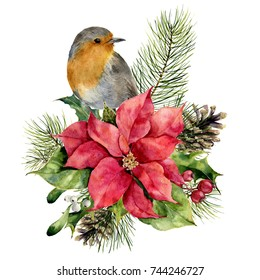 Watercolor robin, poinsettia with Christmas floral decor. Hand painted bird and traditional flower and plants: holly, mistletoe, berries and fir branch isolated on white background. Holiday print