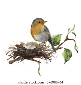 Watercolor robin sitting on nest with eggs. Hand painted illustration with bird and branch of wood isolated on white background. Nature print for design.