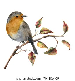Watercolor robin sitting on tree branch with red and yellow leaves. Autumn illustration with bird and fall leaves isolated on white background. Nature print for design
