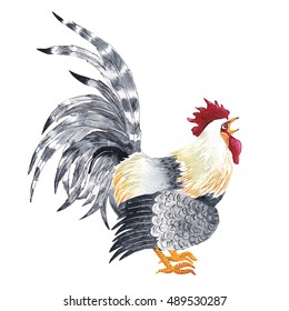 Watercolor rooster - symbol of 2017 year