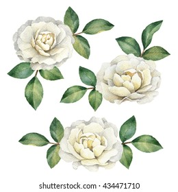 Watercolor rose flowers, perfect for greeting cards