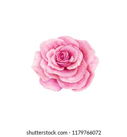 Watercolor rose isolated on white background. Handmade drawing.