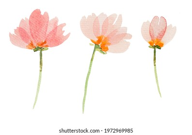 Watercolor rpink flowers Illustrations isolated