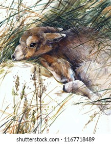 watercolor saigas hand drawn illustration