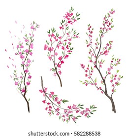 Watercolor sakura branch. Cherry blossom.