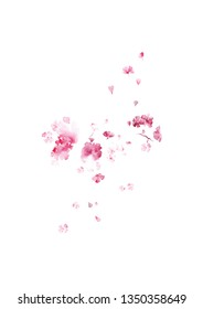 Watercolor sakura. Cherry blossom flowers on white background. Spring card