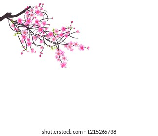 Watercolor sakura frame and Lovely spring background with tulip flowers. Background with blossom cherry tree branches.