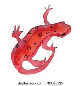 Watercolor salamander illustration