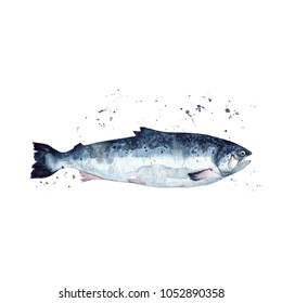 Watercolor salmon. Isolated. Hand-drawn illustration.