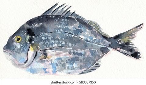 Watercolor sea bream fish