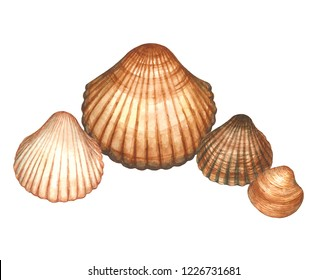 Watercolor sea cockle shell composition with different clams or molluscs of Mediterranean sea (Cerastoderma edule, Chamelea gallina). Ocean nature illustration . Tropical beach composition. Isolated.