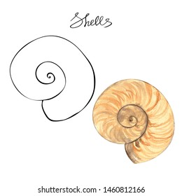 Watercolor sea shell illustration. Hand drawn contour and colored view isolated on white background. Snail shell aquarelle picture.