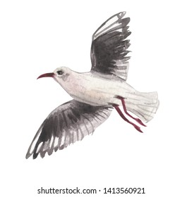 Watercolor seagull in flight with wings spread wide. For design compositions on the theme of an unforgettable summer holiday on the coast of the sea or ocean. Symbolizes sunny calm weather.
