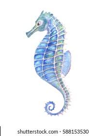 Watercolor seahorse, watercolor illustration.