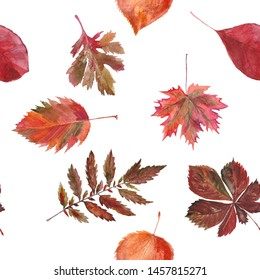 Watercolor seamless background leafs. Autumn. White and red