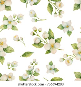 Watercolor seamless pattern of flowers and branches Jasmine isolated on a white background. Floral illustration for design greeting cards, wedding invitations, natural cosmetics, packaging and tea.