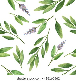 Watercolor seamless pattern hand drawn herb sage. Leaves and branches of sage on a white background. Herbs for packaging design, cards, postcards and book illustrations.