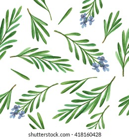 Watercolor seamless pattern hand drawn herb rosemary. Leaves and branches of rosemary on a white background. Herbs for packaging design, cards, postcards and book illustrations.