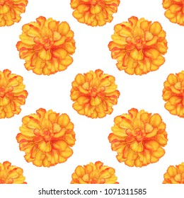 Watercolor seamless pattern. Marigold flowers on white background. Hand painting on pape