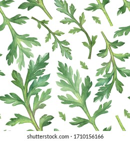 Watercolor Seamless pattern of poppy leaves on white background. Green texture.