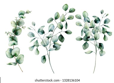 Watercolor seeded and silver dollar eucalyptus set. Hand painted eucalyptus branch and leaves isolated on white background. Floral illustration for design, print, fabric or background