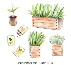 watercolor seedlings and sprouts in pot and wooden box, organic seeds in packs, young seasonal plants, gardening hand drawn set
