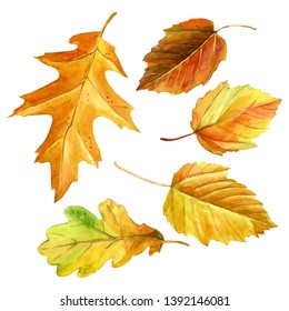 Watercolor set of autumn leaves.
