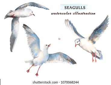 Watercolor set of beautiful seagulls in different positions. Hand drawn  illustration, isolated on a white background.