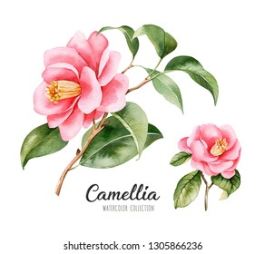 Watercolor set of blooming Camellia twigs.