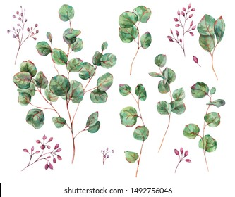 Watercolor Set of Blooming Eucalyptus Leaves, Berries, Vintage Watercolor Botanical Collection Isolated on White Background.