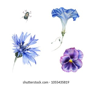 Watercolor set of blue garden flowers: cornflower, ipomoea, viola and chafer