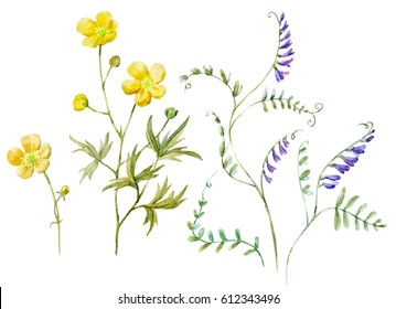 Watercolor set  botanical illustration of a flower Yellow buttercup and mouse polka dots.