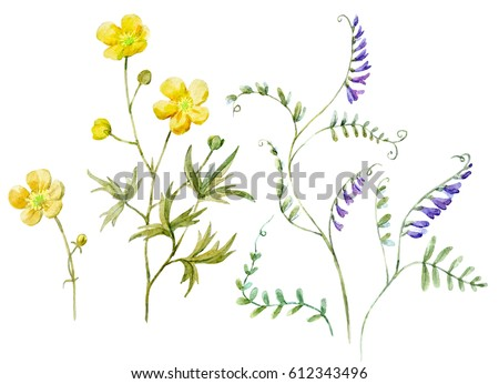 Watercolor Set Botanical Illustration Flower Yellow Stock