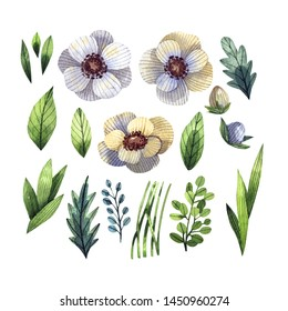 Watercolor set of bright flowers and leaves drawn by hand. Watercolor illustrations for stickers, invitations, cards and other materials.Anemone flowers