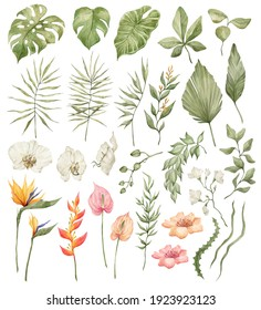 Watercolor set of bright tropical leaves and flowers. Leaves and branches from the jungle. Palm leaf, monstera, grass, orchid, strelitzia, heliconia, anthurium.