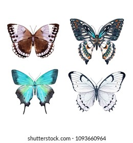 Watercolor set of a butterfly, white, emerald, bright butterfly on a white background