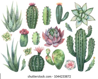 Watercolor set of cacti and succulent plants isolated on white background. Flower illustration for your projects, greeting cards and invitations.