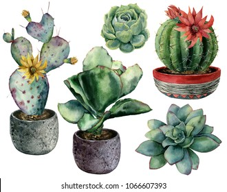 Watercolor set with cactus in a pot and flowers composition. Hand painted cereus, opuntia and echeveria with succulent isolated on white background. Illustration for design, print, fabric, background