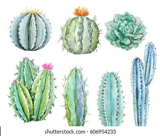 Watercolor set of cactus, succulents isolated illustration on a white background