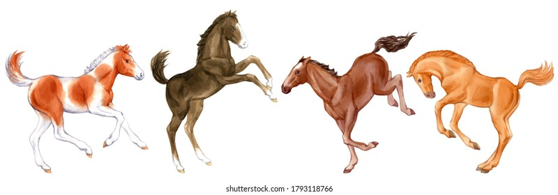 Watercolor set of cute foals isolated on white background. Original stock illustration of baby horses.