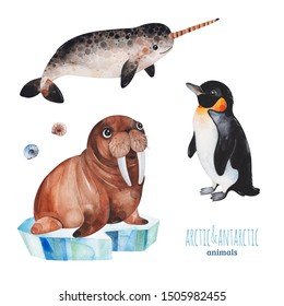 Watercolor set with cute penguin,narwhal and walrus .Cartoon arctic and antarctic animals.Perfect for your project,print,scrapbook,baby shower,Birthday card,invitations,greeting card and much more.