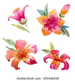 Watercolor set of cute pink and orange flowers, a set of isolated objects