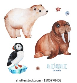 Watercolor set with cute polar bear,puffin and walrus .Cartoon arctic and antarctic animals.Perfect for your project,print,scrapbook,baby shower,Birthday card,invitations,greeting card and much more.