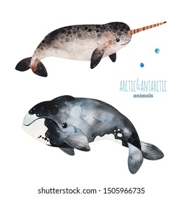 Watercolor set with cute whale and narwhal.Cartoon arctic and antarctic animals.Perfect for your project,print,scrapbook,baby shower,Birthday card,invitations,greeting card and much more.
