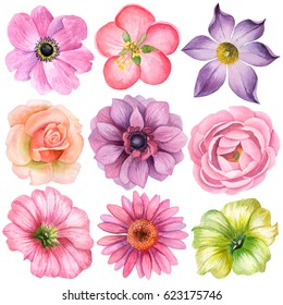 Watercolor set of different flowers, hand drawn illustration of anemone, peony, echinacea, petunia, rose and pasque flowers. Floral elements isolated on white background.