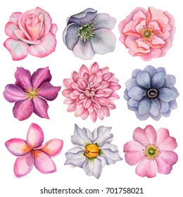 Watercolor set of different flowers, hand drawn illustration of anemone, dahlia, clematis, rose, rosehip, plumeria and hellebore flowers. Painted floral elements isolated on white background.