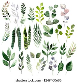 Watercolor set with different leaves. Hand painted elements. Floral illustration isolated on white background. For design and textile.