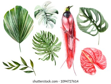 Watercolor set with different tropical leaves and  bird. Illustration