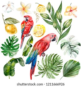 Watercolor set with different tropical leaves, fruits and bird. Illustration